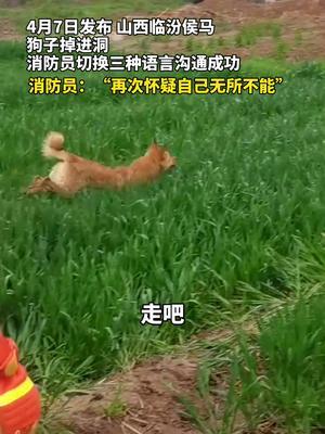 消防员切换三种语言和狗沟通,救出落井狗子。自己被自己惊讶到了!